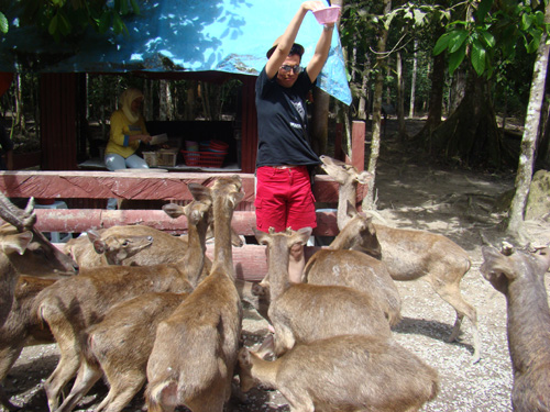 The deer love me! calm guys, keep calm